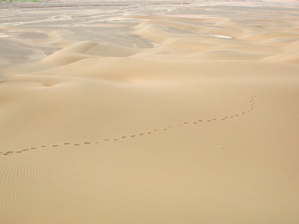 シルクロード一人旅「我的長征2006」その28・トルファン・沙山公園-2816