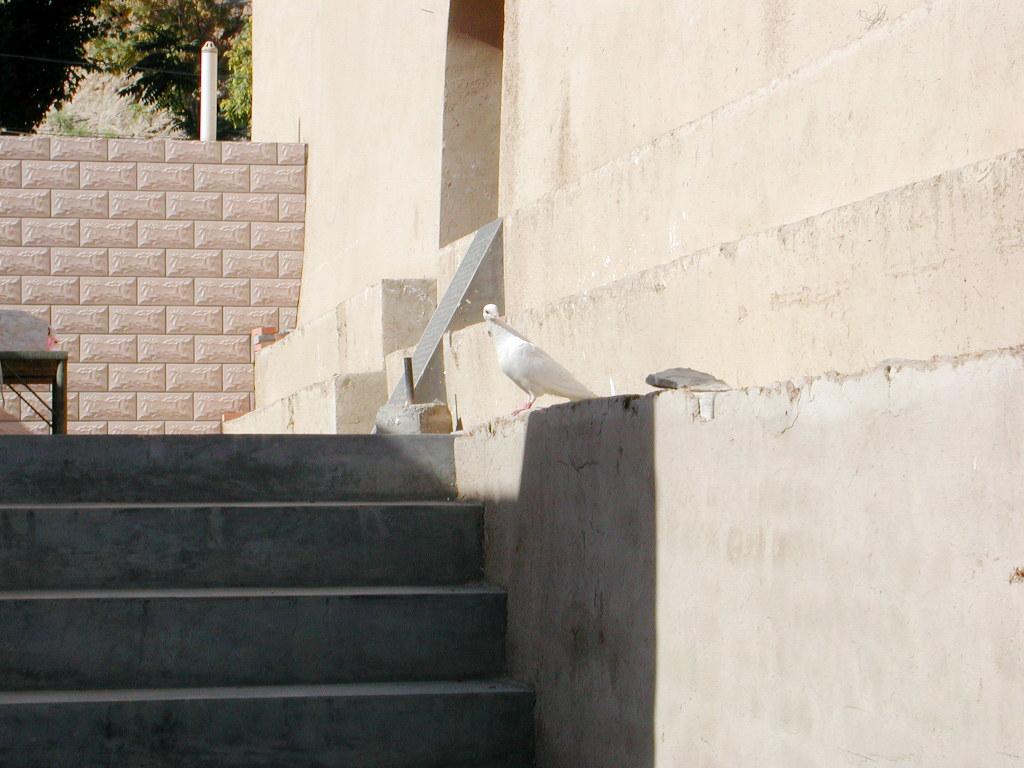 シルクロード一人旅「我的長征2006」その33・トルファン・交河故城-3305
