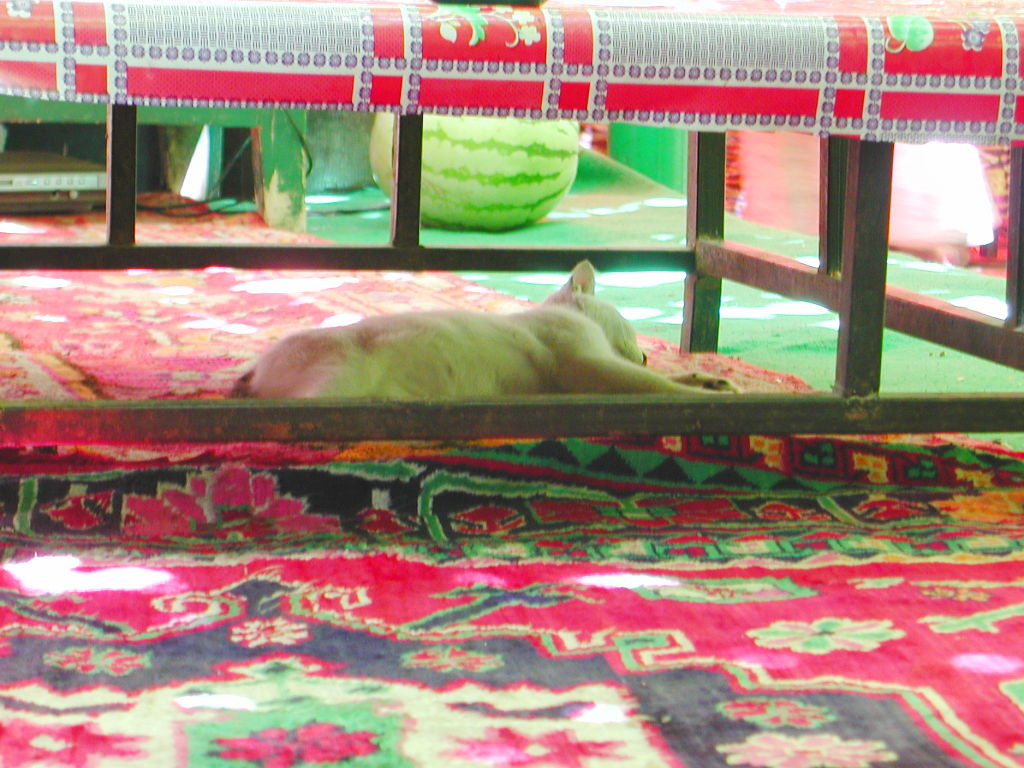 シルクロード一人旅「我的長征2006」その36・トルファン・葡萄溝の食堂でのんびり-3615