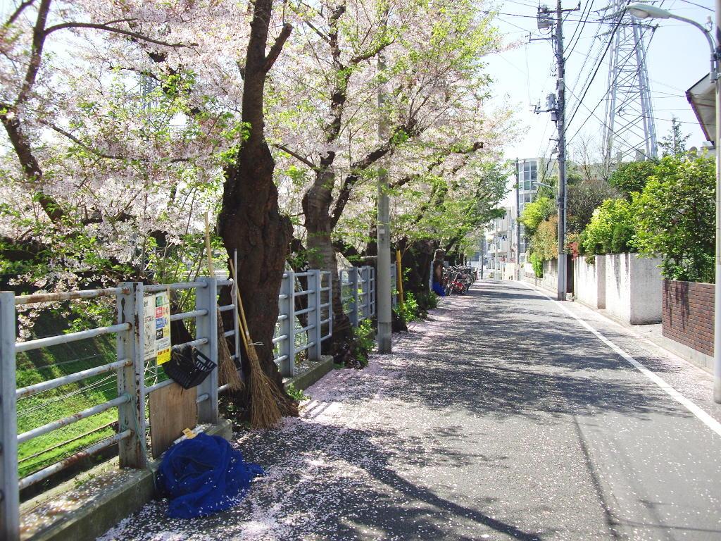 東急池上線・桜の石川台2009春-1116