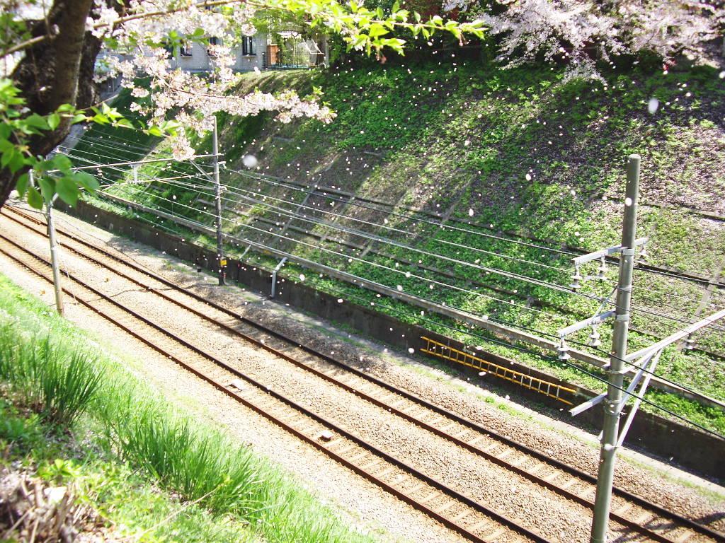 東急池上線・桜の石川台2009春-1118