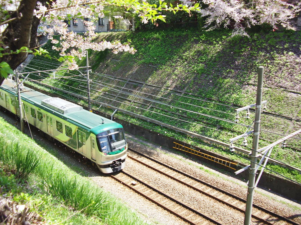 東急池上線・桜の石川台2009春-1119