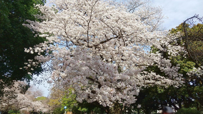 桜の時期はちょいと時間が無いのよ・2021春-1001